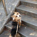 朝から犬の散歩