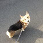 犬の散歩はちゃんとやってる